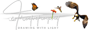 Trogography Logo