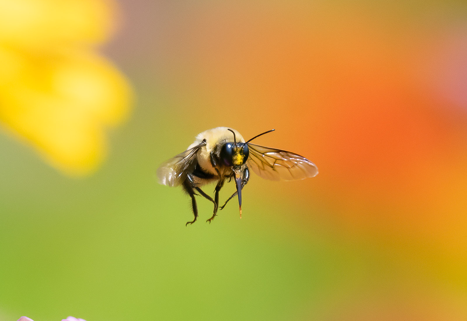 Bumblebee among the flowers