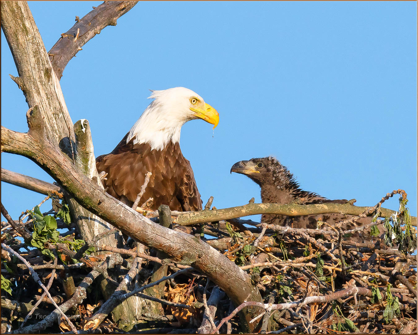 Mama Eagle and her eaglet