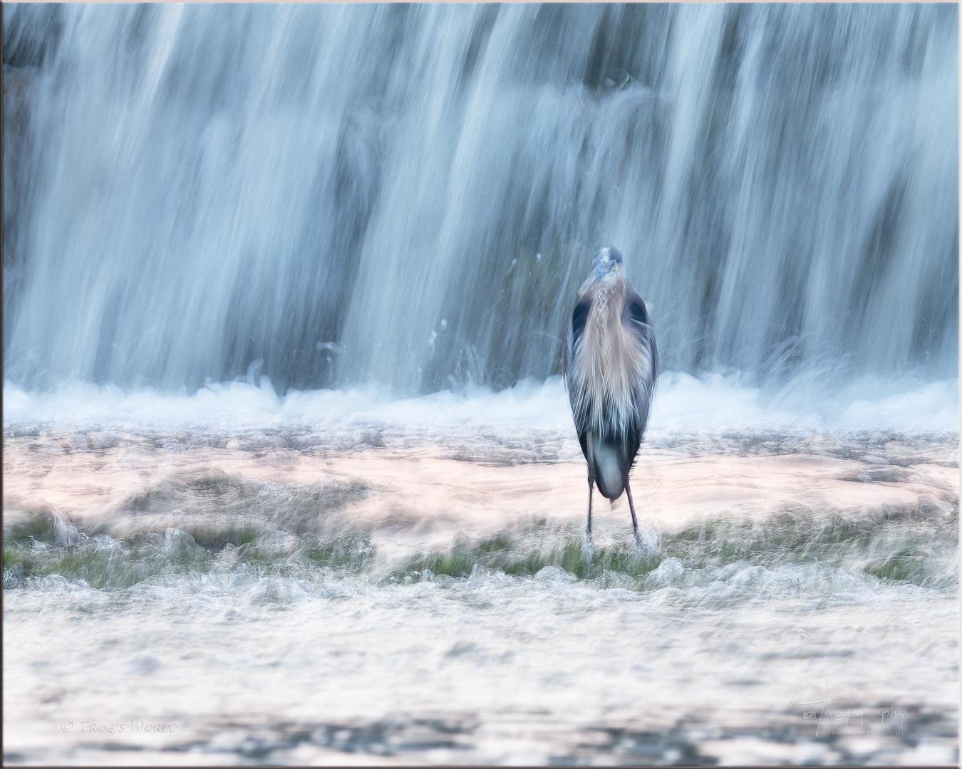 Blue Heron and waterfall