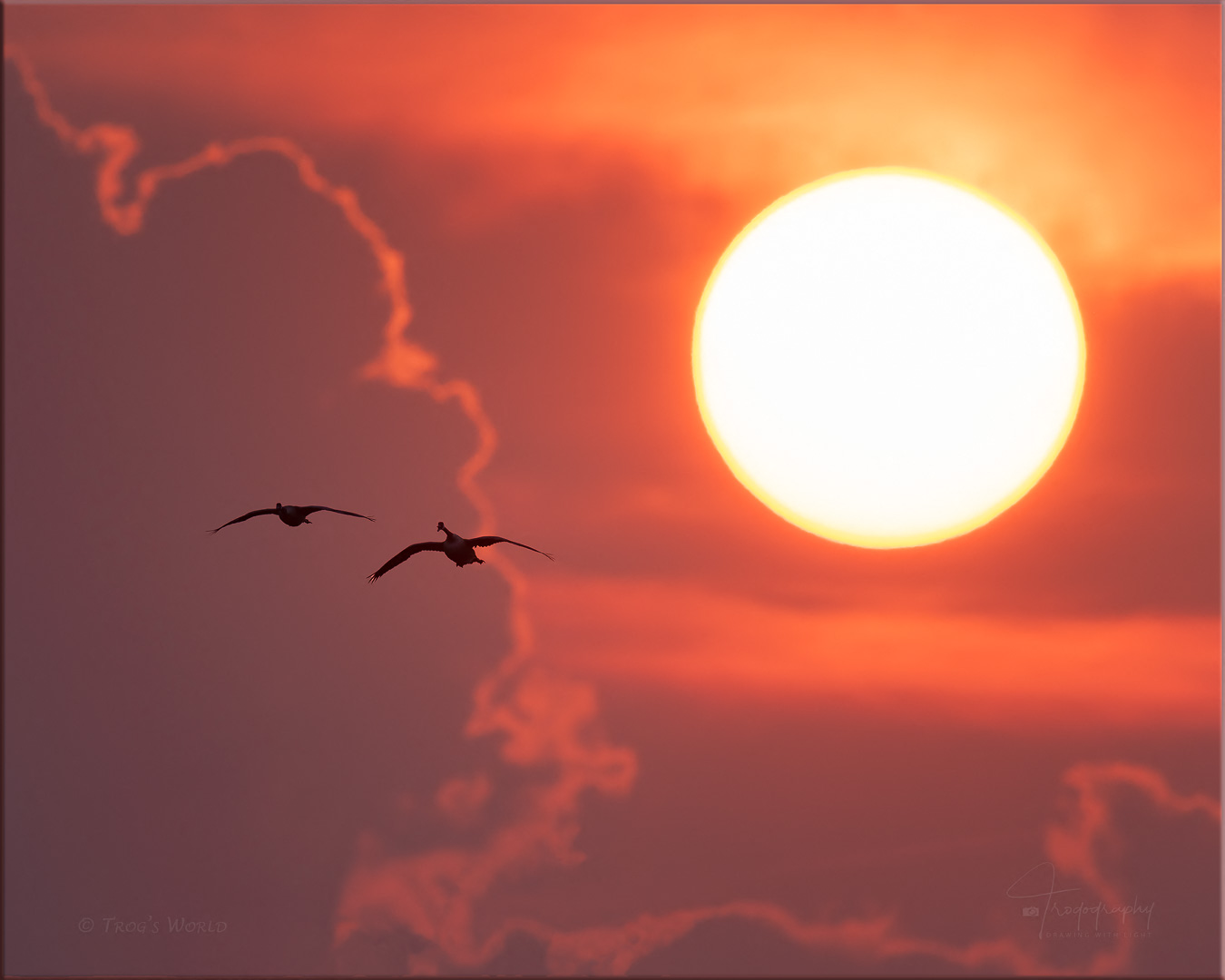 Geese flying and setting sun